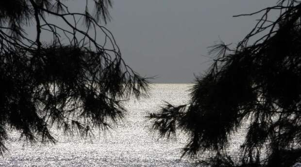Минприроды Крыма подтвердило возбуждение уголовного дела из-за вырубки деревьев в Форосском парке