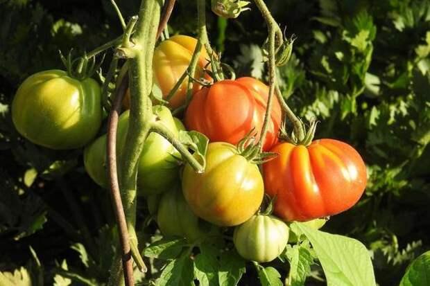 Условия выращивания у каждого свои