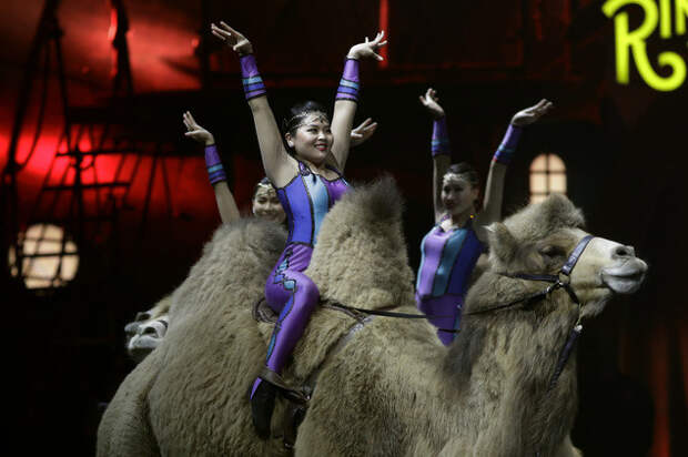 С 1967 года цирк принадлежит семье Фелд  закрытие, сша, цирк