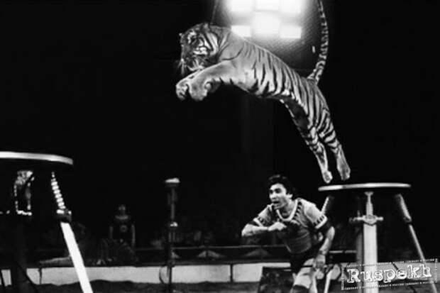 Запашный назвал Багдасарова большим мастером циркового дела