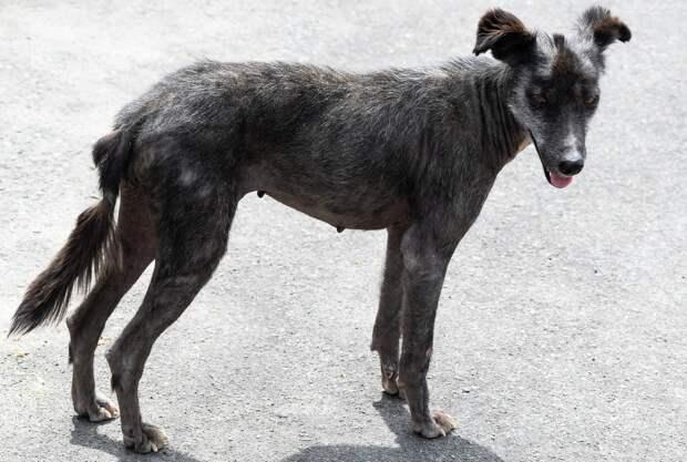 Ряд нарушений выявили в приюте для бездомных животных в Глазове