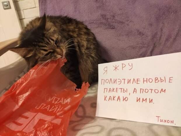 кот ест пакет