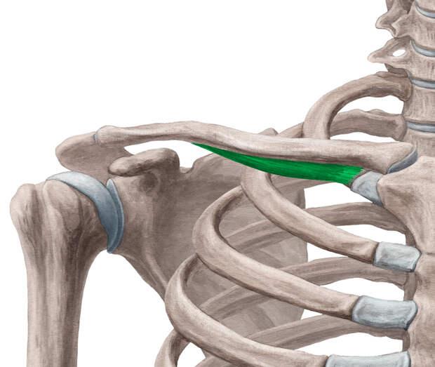Упражнение на подключичную мышцу