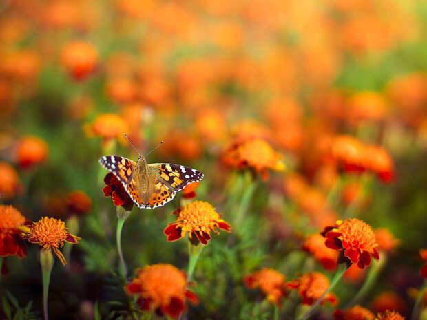 10 великолепных растений, цветущих в сентябре - Smak.ua