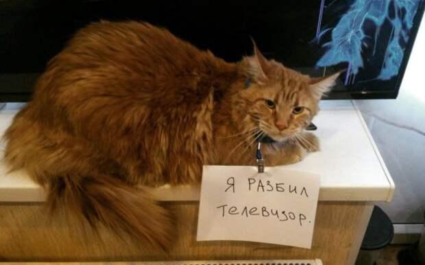 пушистый рыжий кот с запиской