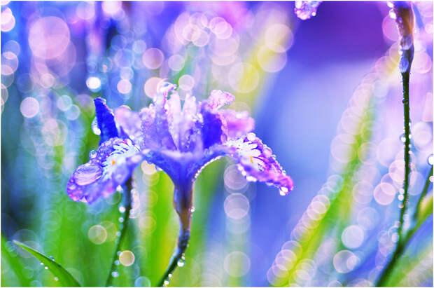 NewPix.ru - Floral  автор Katsumi Oyamada