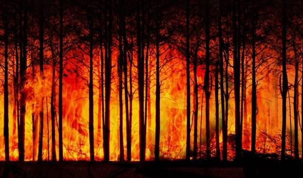 Свыше 118млн ущерба нанесли лесные пожары Свердловской области