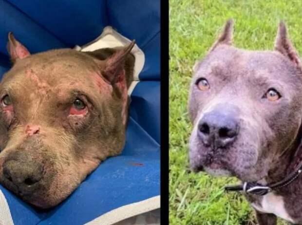 После 4 лет поисков семья нашла пропавшую собаку