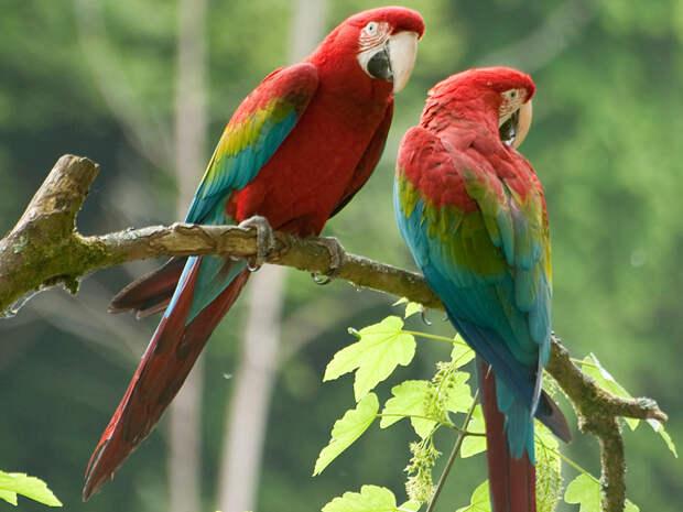 Выставка попугаев открывается в Иркутске 16 октября Новости Афиша Иркутска на IRK.ru