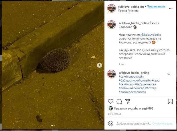 Фото дня: ёжик прогулялся по Русанова