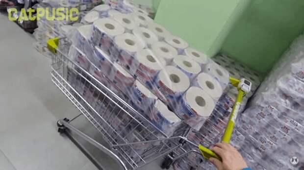 Для этого пара из Белоруссии закупила в магазине ни много ни мало сотню рулонов туалетной бумаги Пусик, бумага, видео, животные, кот, рулоны, хозяева