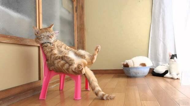Дрессировке поддаются: как научить кошку полезным командам