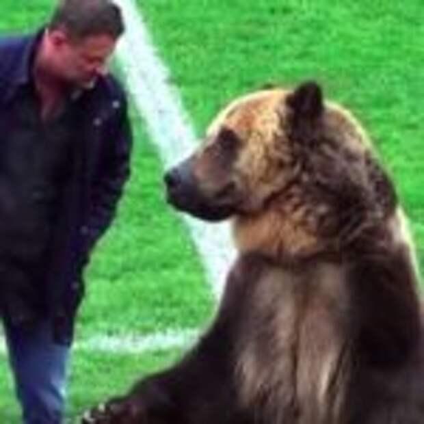 Медведь открыл матч чемпионата России по футболу и это вызвало негодование зоозащитников