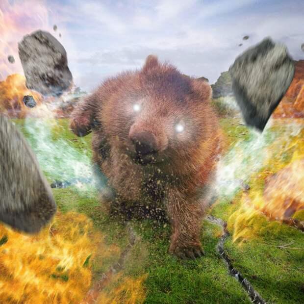 Вомбат стал героем фотошоп-битвы (фото)