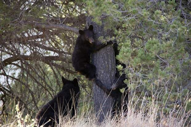 Трех медвежат в Кировской области выпустили в дикую природу