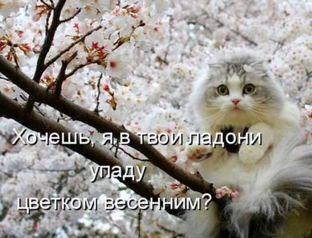 2f11f6f558a78bf2ce091a138be_prev