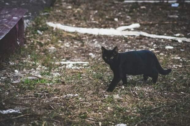 Кошка отблагодарила женщину, скоторой подружилась