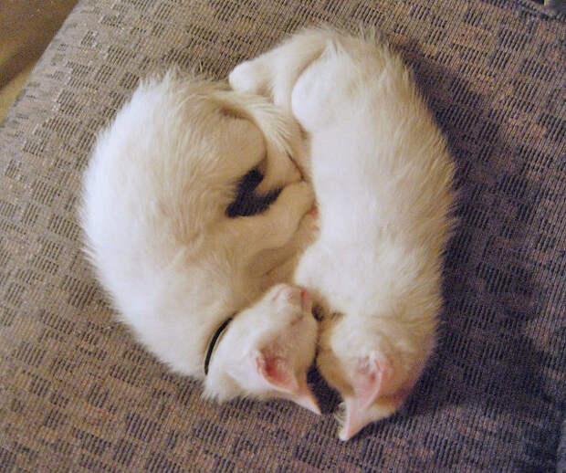Котята спят рядышком. Фото