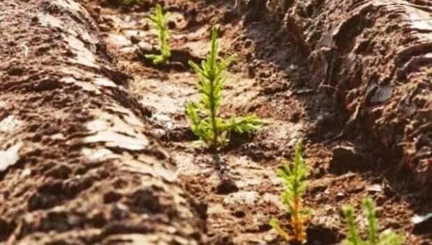 Ценные породы деревьев восстановили на площади более 10 га в Подольском лесничестве