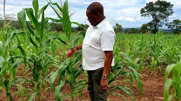 Россия поддерживает развитие сельского хозяйства ЦАР