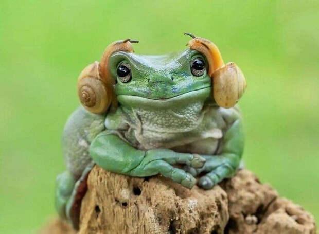 Забавные фотографии животных, не поддающихся рациональному объяснению