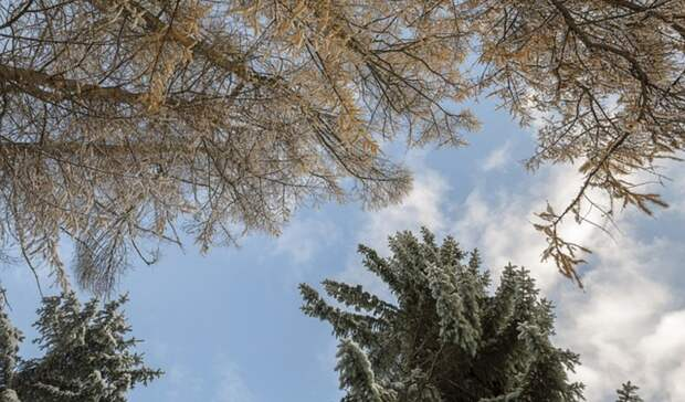 Холод усилится в Карелии