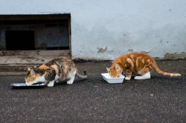 Помогите! Эти жизни на волоске! Сотрудники жилконторы выступают активно против кошек, они подговаривают жителей дома избавиться от животных...