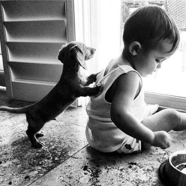 дети должны расти с домашними животными (16)