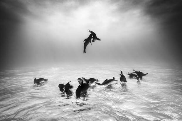 Топ-10 самых лучших фотографий дикой природы