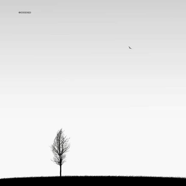 ФОТОВЫСТАВКА. Минимализм в фотографиях Hossein Zare