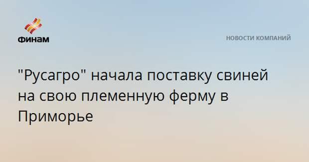 """""""Русагро"""" начала поставку свиней на свою племенную ферму в Приморье"""
